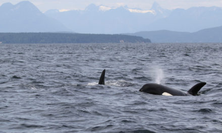 Being Frank: Habitat Key for Salmon and Orcas