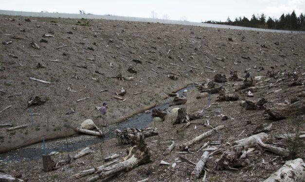 Former Landfill Restored to Salmon-Friendly Stream Again