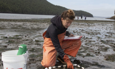 Swinomish Studies Early Life Stages of Dungeness Crab