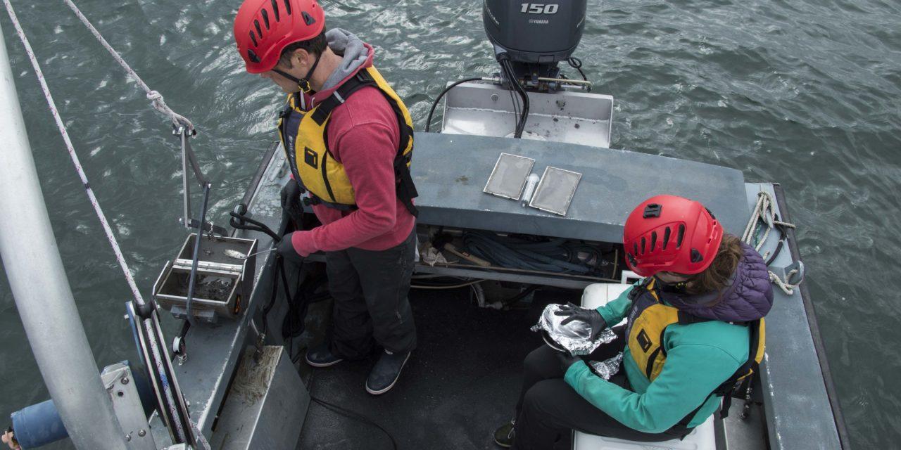 Monitoring Port Gamble Bay Sediment to Protect Herring Embryos